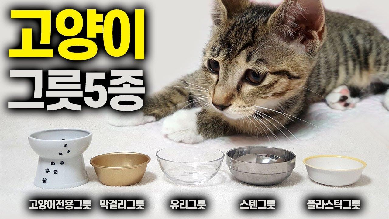 고양이 사료그릇 5종류 중 어떤 선택을 할까? 전용사기그릇, 막걸리그릇, 플라스틱그릇, 유리그릇, 스텐그릇