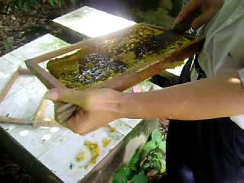 Quay ong lấy mật.AVI