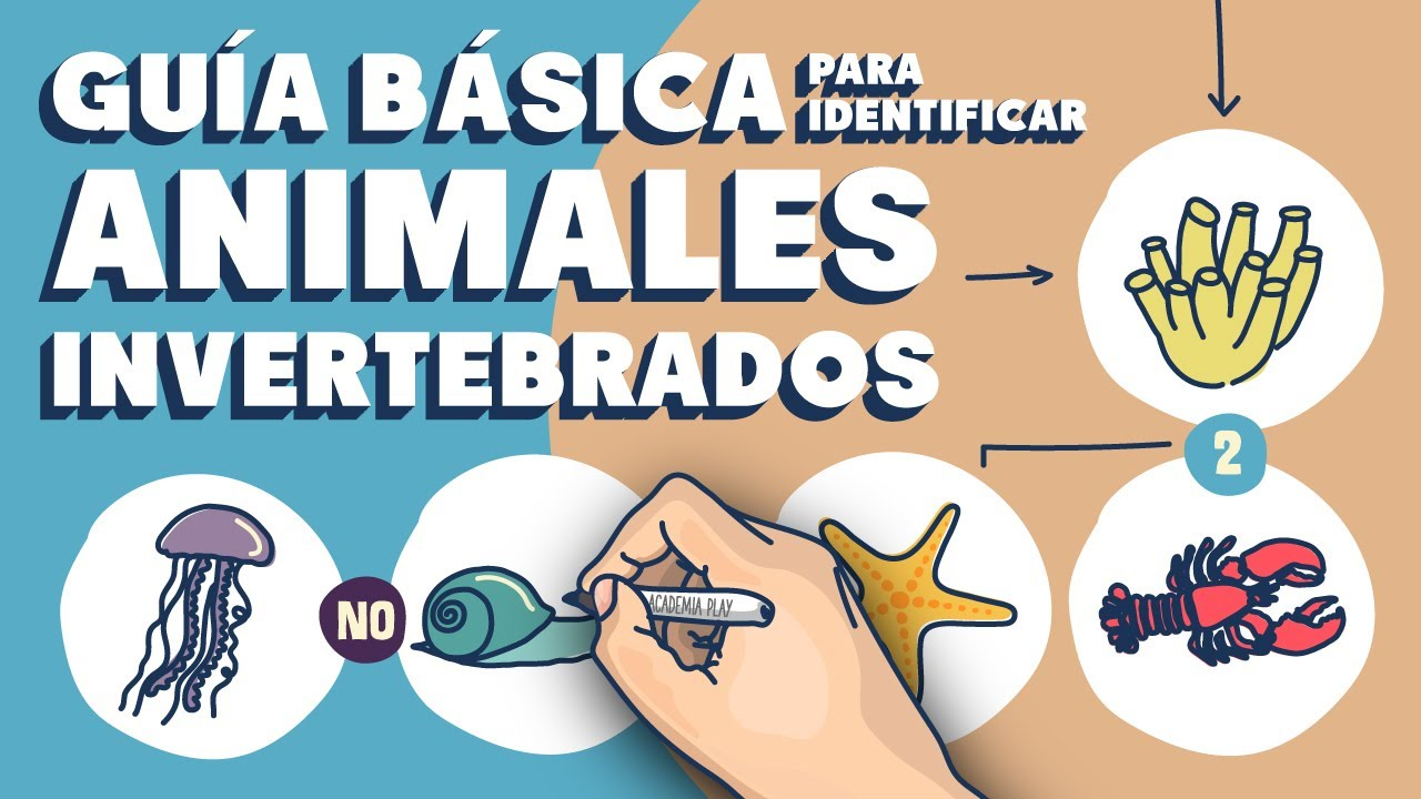 Guía básica para distinguir animales invertebrados - YouTube