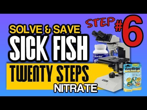 Nitrates In Fish Tanks And Koi Ponds Are TOXIC: Step 6 Of 20