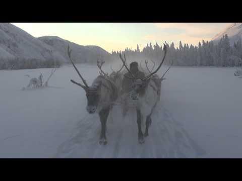 Reindeer Sleigh Ride in Oymyakon, Yakutia, Siberia Russia. Winter Travel.