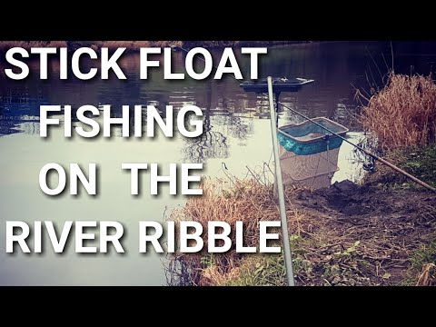 Stick Float Fishing For Dace On The River Ribble