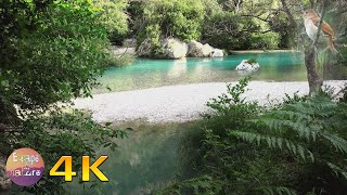Nightingale singing in Earthly Paradise-Gentle river sound-Relaxing forest sounds-Bird song-4K video