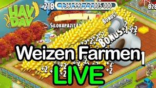 Weizen Farmen und Leveln 😍 Hay Day | SyromerB