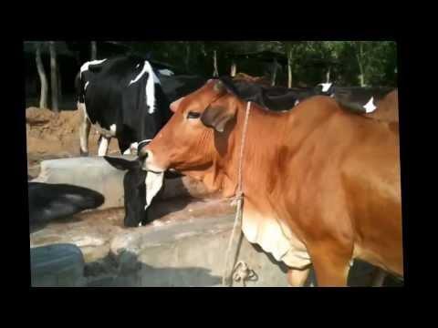 Hillsdale Multi Farm Chittagong