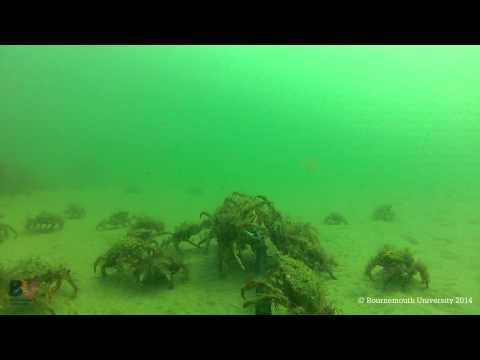 Boscombe Artificial Surf Reef Bait Cam - Bournemouth University