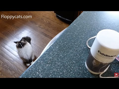 Tips for Switching Cats from Dry Food to Wet Food Only - ねこ - ラグドール - = ネコ - ねこ- Floppycats