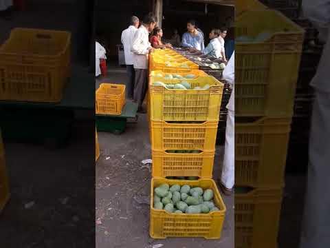 Mango sardar market valsad