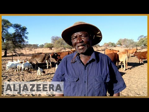 South Africa's worst drought in years affects farmers