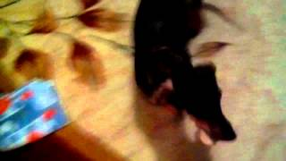 АКРИС (трейлер фильма Такса)