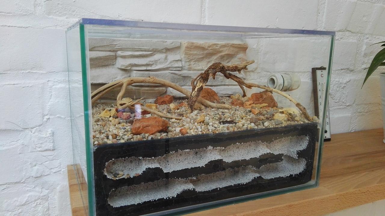 Bauanleitung vom aquarium zum formicarium youtube - Aquarium ruckwand selber bauen anleitung ...