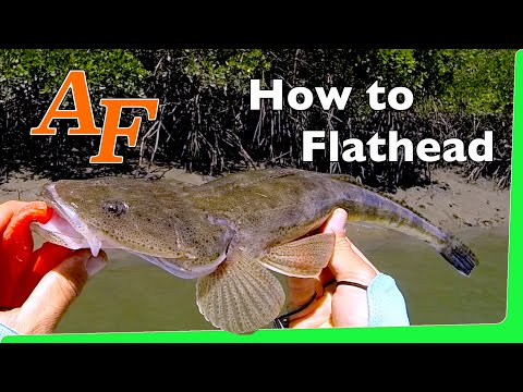 How to Catch Flathead on soft plastics mostly Dusky Flathead Fishing Video EP.220