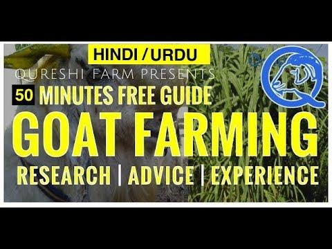 (URDU) 50 Minutes Goat Farming/ Bakre Kashkari Mukamal Guide (Research, Expert Advice & Experience)