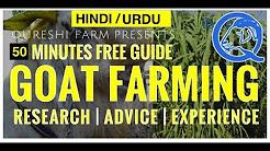 Goat Farming Tips In Urdu | Melaweb