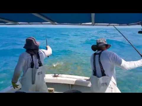 Fishing for yellowtail breaking records