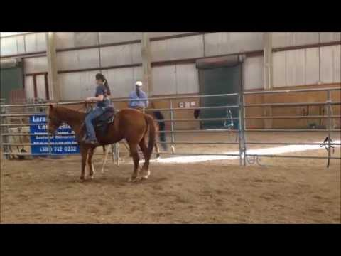 University of Wyoming Ranch Horse Versatility Team 2015