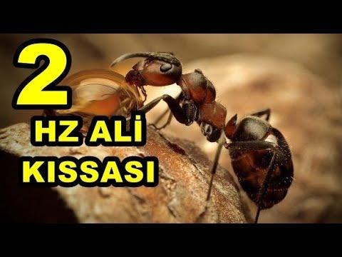 hz Ali ve Karınca & hz Ali'den dosta tavsiye