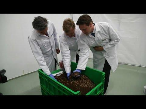 شاهد: مزرعة يرقات ذباب في هولندا لزيادة إنتاج البروتين في الأعلاف…  - 09:53-2019 / 6 / 12