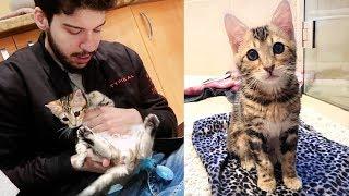 we-got-a-new-kitten