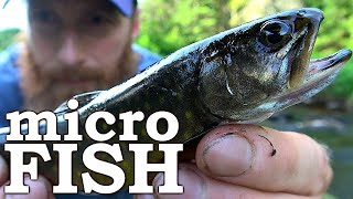 MICRO FISH Catch and Cook, CRAZY Canadian MOOSE ROAD RACING (Scary Bear too)! | Fishing, Camping