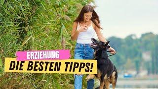 9 Erziehungstipps, die JEDER neue Hundehalter kennen muss ✅