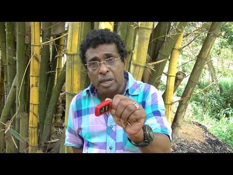 Organic Tea Farming by Mr.Thilak Kandegama
