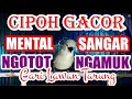 Cipoh Sirtu Gacor Mental Sangar Birahi Ngotot  Mp3 - Mp4 Download