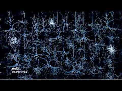 redes-124:-modificar-el-cerebro-con-luz---neurociencia
