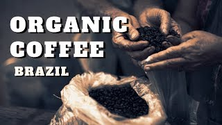 Organic Coffee Brazil - Fresh Quality