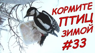 Кормите птиц зимой/ Длинное видео