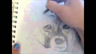 Drawing A Dog (papillon)