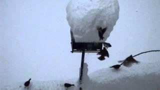 Feeding birds with Snow feeder@MA
