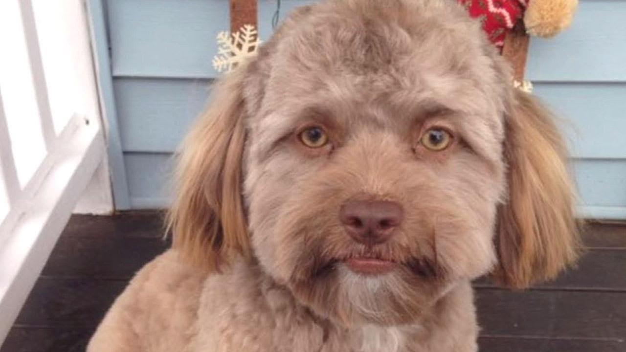 does-this-dog-look-like-jake-gyllenhaal