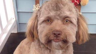 Does This Dog Look Like Jake Gyllenhaal?