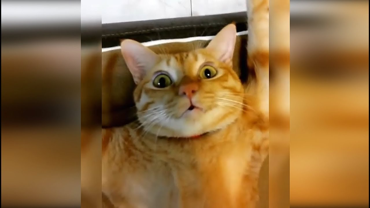 Смешные Видео Приколы с Животными 2019 | Смешные | Смешные Видео про Животных - Приколы с Собаками 2019 До Слёз 6 Минут