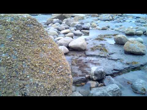 Anchor point beach gold placer deposit.