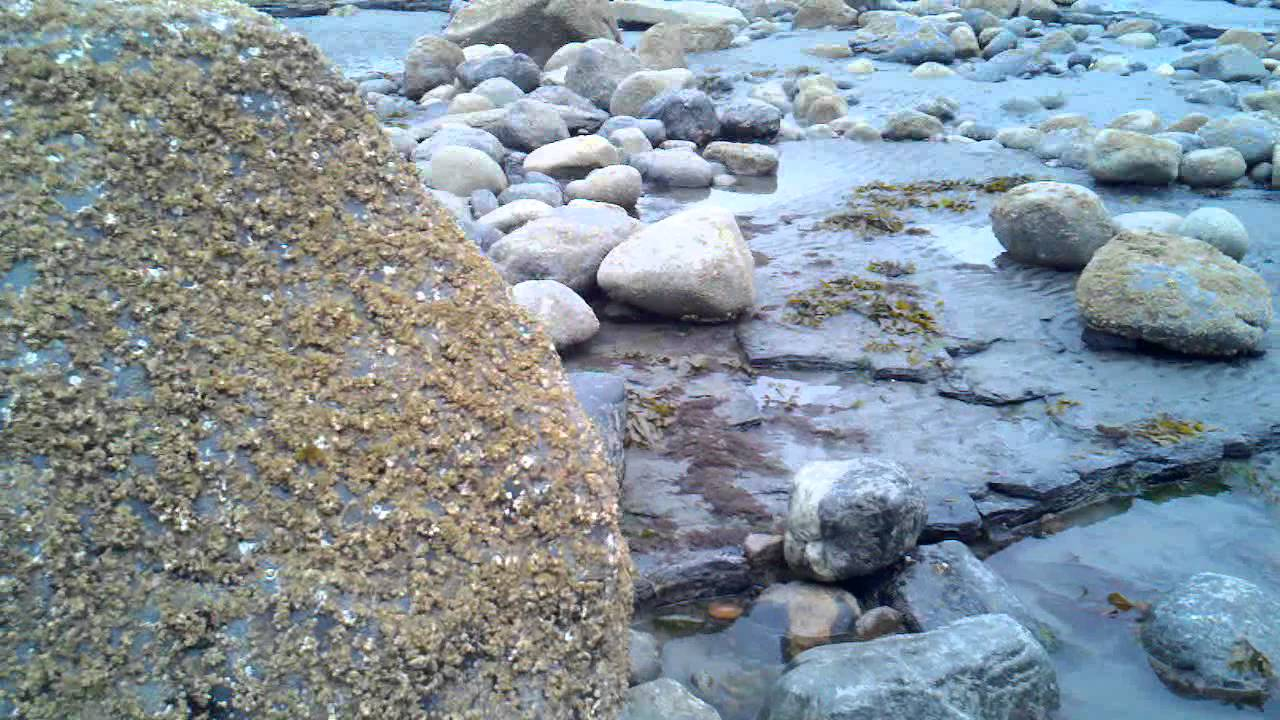 Quantitative Heavy-Mineral Analysis of a Pliocene Beach Placer ...