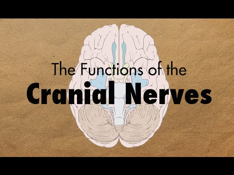 The Functions of the Cranial Nerves - MEDZCOOL