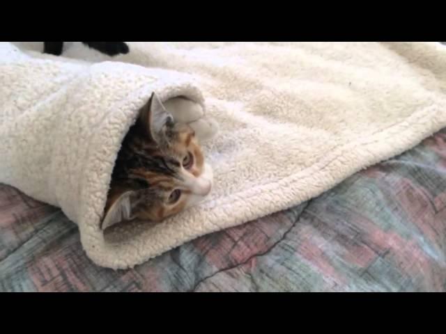 Baby Cat Burrito