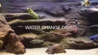 Surface agitation | How i do my water change | How to use aquarium gravel vac