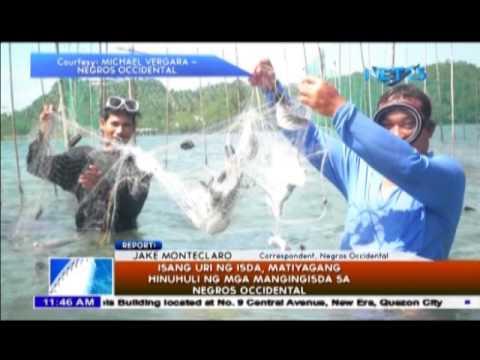 Kakaibang isda, hinuhuli sa Negros Occidental