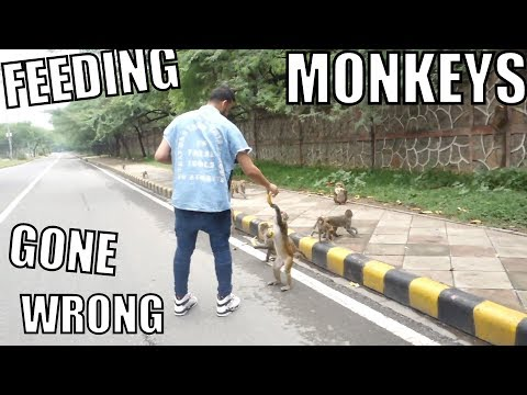 FEEDING MONKEYS GONE WRONG!!