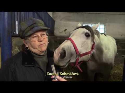 ZORIANA - Kôň