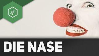 Die Nase – Organe des Menschen