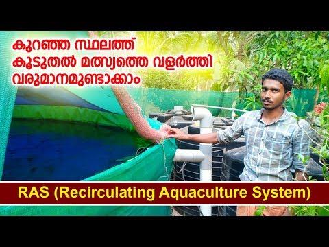 RAS fish farming കുറഞ്ഞ സ്ഥലത്തു കൂടുതൽ മത്സ്യത്തെ വളർത്താം