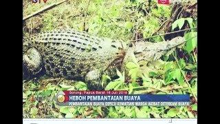 HEBOH!! Ratusan Bangkai Buaya yang Dibantai Warga Sorong Akhirnya Dibakar - BIP 17/07
