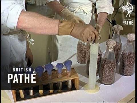 Growing And Eating Aka Mushrooms (1966)
