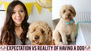 EXPECTATIONS VS REALITY OF HAVING A DOG I dizzybrunette3 I AD