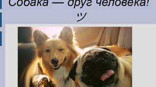 "Краснов Никита. Презентация ""Собака-друг человека"""