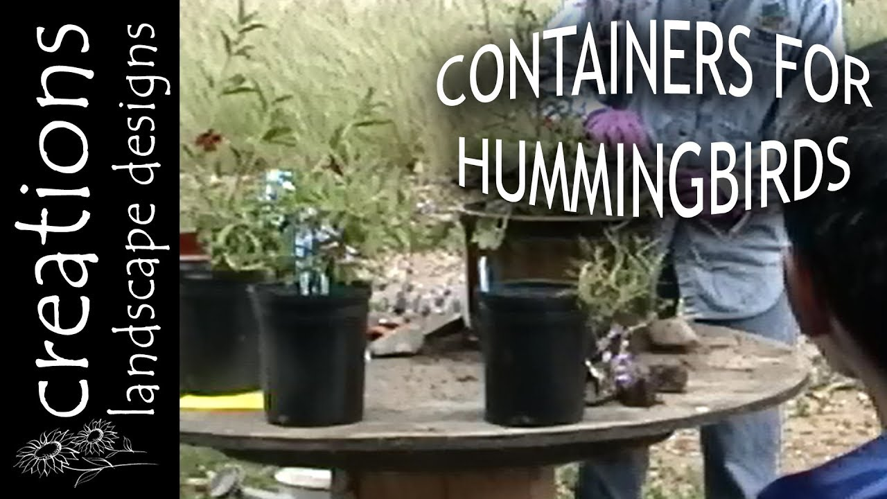 Http Californianativeplants Com Creations Landscape Designs
